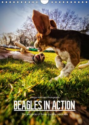 Beagles in action (Wall Calendar 2019 DIN A4 Portrait), Gregor Hartmann