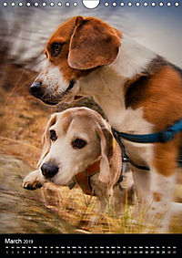Beagles in action (Wall Calendar 2019 DIN A4 Portrait) - Produktdetailbild 3