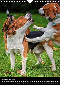 Beagles in action (Wall Calendar 2019 DIN A4 Portrait) - Produktdetailbild 11