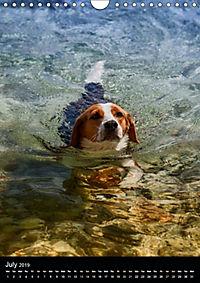 Beagles in action (Wall Calendar 2019 DIN A4 Portrait) - Produktdetailbild 7
