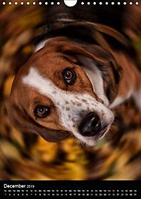 Beagles in action (Wall Calendar 2019 DIN A4 Portrait) - Produktdetailbild 12