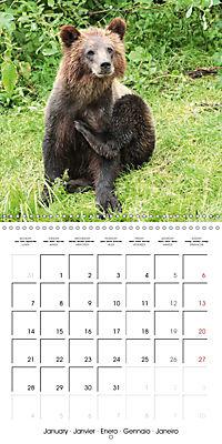 Bears funny moments (Wall Calendar 2019 300 × 300 mm Square) - Produktdetailbild 1