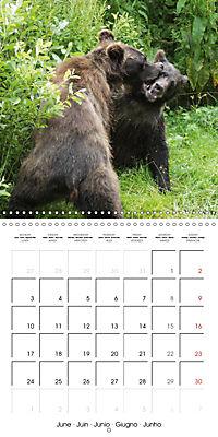 Bears funny moments (Wall Calendar 2019 300 × 300 mm Square) - Produktdetailbild 6