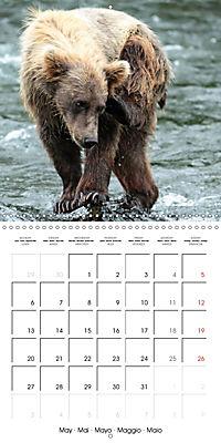 Bears funny moments (Wall Calendar 2019 300 × 300 mm Square) - Produktdetailbild 5