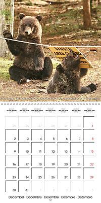 Bears funny moments (Wall Calendar 2019 300 × 300 mm Square) - Produktdetailbild 12