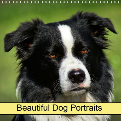 Beautiful Dog Portraits (Wall Calendar 2019 300 × 300 mm Square), k.A. Kattobello