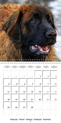 Beautiful Dog Portraits (Wall Calendar 2019 300 × 300 mm Square) - Produktdetailbild 2