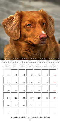 Beautiful Dog Portraits (Wall Calendar 2019 300 × 300 mm Square) - Produktdetailbild 10