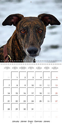 Beautiful Dog Portraits (Wall Calendar 2019 300 × 300 mm Square) - Produktdetailbild 1