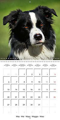 Beautiful Dog Portraits (Wall Calendar 2019 300 × 300 mm Square) - Produktdetailbild 5