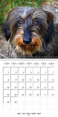 Beautiful Dog Portraits (Wall Calendar 2019 300 × 300 mm Square) - Produktdetailbild 4