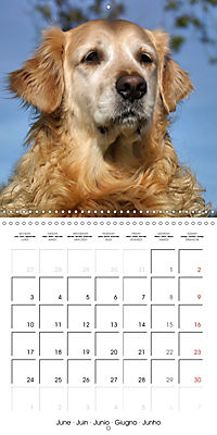 Beautiful Dog Portraits (Wall Calendar 2019 300 × 300 mm Square) - Produktdetailbild 6