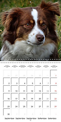 Beautiful Dog Portraits (Wall Calendar 2019 300 × 300 mm Square) - Produktdetailbild 9