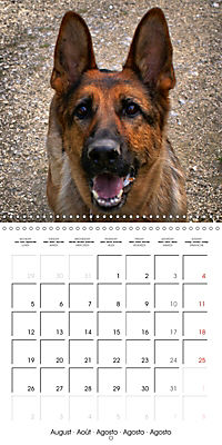 Beautiful Dog Portraits (Wall Calendar 2019 300 × 300 mm Square) - Produktdetailbild 8