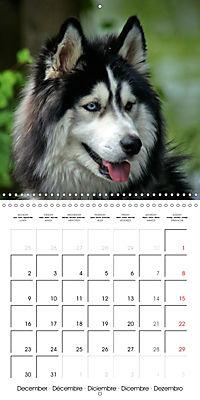 Beautiful Dog Portraits (Wall Calendar 2019 300 × 300 mm Square) - Produktdetailbild 12