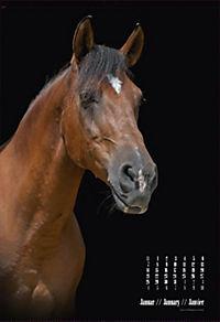 Beautiful Horses 2019 - Produktdetailbild 1