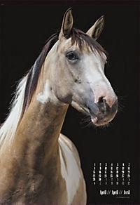 Beautiful Horses 2019 - Produktdetailbild 4