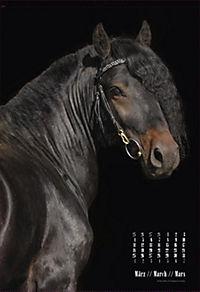 Beautiful Horses 2019 - Produktdetailbild 3