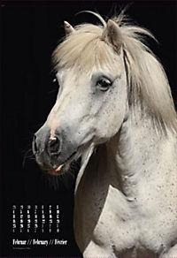 Beautiful Horses 2019 - Produktdetailbild 2