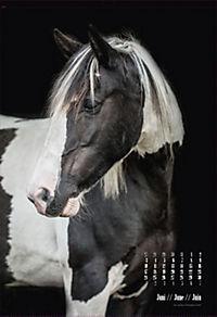 Beautiful Horses 2019 - Produktdetailbild 6