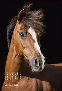 Beautiful Horses 2019 - Produktdetailbild 7