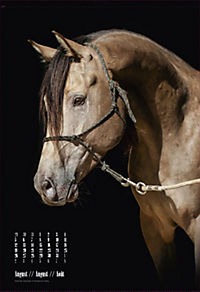 Beautiful Horses 2019 - Produktdetailbild 8