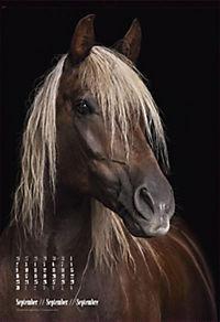 Beautiful Horses 2019 - Produktdetailbild 9