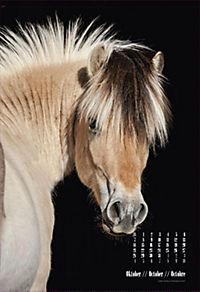 Beautiful Horses 2019 - Produktdetailbild 10