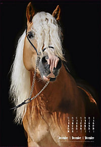 Beautiful Horses 2019 - Produktdetailbild 12
