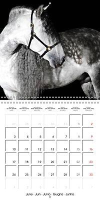 BEAUTIFUL HORSES (Wall Calendar 2019 300 × 300 mm Square) - Produktdetailbild 6