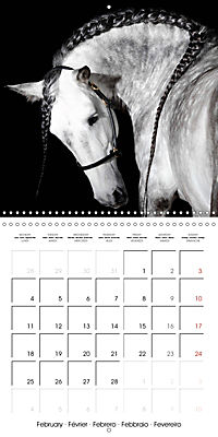 BEAUTIFUL HORSES (Wall Calendar 2019 300 × 300 mm Square) - Produktdetailbild 2