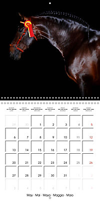 BEAUTIFUL HORSES (Wall Calendar 2019 300 × 300 mm Square) - Produktdetailbild 5