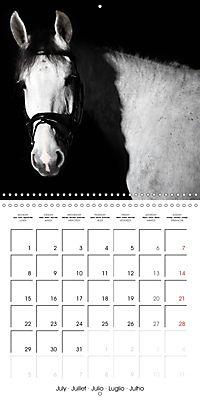 BEAUTIFUL HORSES (Wall Calendar 2019 300 × 300 mm Square) - Produktdetailbild 7