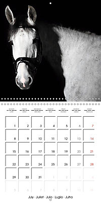 BEAUTIFUL HORSES (Wall Calendar 2019 300 × 300 mm Square) - Produktdetailbild 7