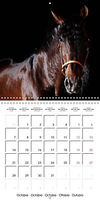 BEAUTIFUL HORSES (Wall Calendar 2019 300 × 300 mm Square) - Produktdetailbild 10