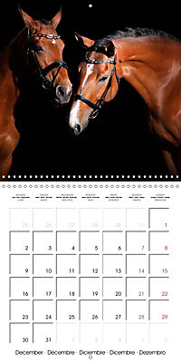 BEAUTIFUL HORSES (Wall Calendar 2019 300 × 300 mm Square) - Produktdetailbild 12