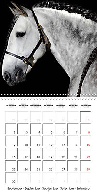 BEAUTIFUL HORSES (Wall Calendar 2019 300 × 300 mm Square) - Produktdetailbild 9