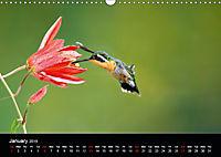 Beautiful Hummingbirds (Wall Calendar 2019 DIN A3 Landscape) - Produktdetailbild 1