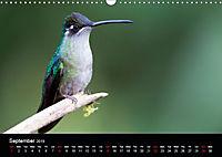 Beautiful Hummingbirds (Wall Calendar 2019 DIN A3 Landscape) - Produktdetailbild 9