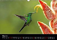 Beautiful Hummingbirds (Wall Calendar 2019 DIN A3 Landscape) - Produktdetailbild 5