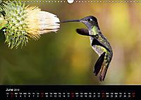 Beautiful Hummingbirds (Wall Calendar 2019 DIN A3 Landscape) - Produktdetailbild 6