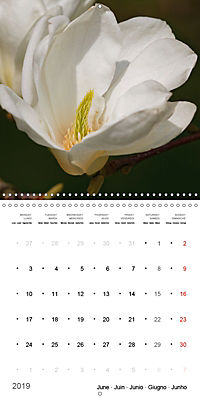 Beautiful Magnolia (Wall Calendar 2019 300 × 300 mm Square) - Produktdetailbild 6