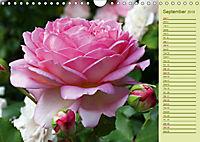 Beautiful Roses in the Garden (Wall Calendar 2019 DIN A4 Landscape) - Produktdetailbild 9