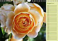 Beautiful Roses in the Garden (Wall Calendar 2019 DIN A4 Landscape) - Produktdetailbild 8
