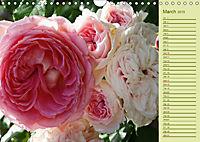Beautiful Roses in the Garden (Wall Calendar 2019 DIN A4 Landscape) - Produktdetailbild 3