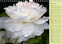 Beautiful Roses in the Garden (Wall Calendar 2019 DIN A4 Landscape) - Produktdetailbild 5