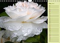 Beautiful Roses in the Garden (Wall Calendar 2019 DIN A4 Landscape) - Produktdetailbild 5