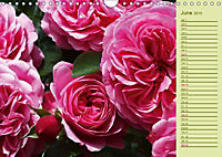 Beautiful Roses in the Garden (Wall Calendar 2019 DIN A4 Landscape) - Produktdetailbild 6