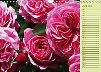 Beautiful Roses in the Garden (Wall Calendar 2019 DIN A4 Landscape) - Produktdetailbild 6