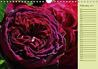 Beautiful Roses in the Garden (Wall Calendar 2019 DIN A4 Landscape) - Produktdetailbild 2
